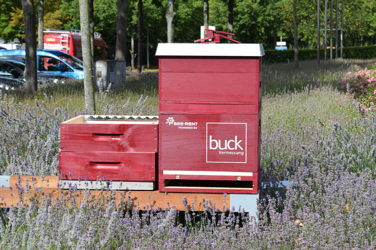 buck Bienen, bee-rent