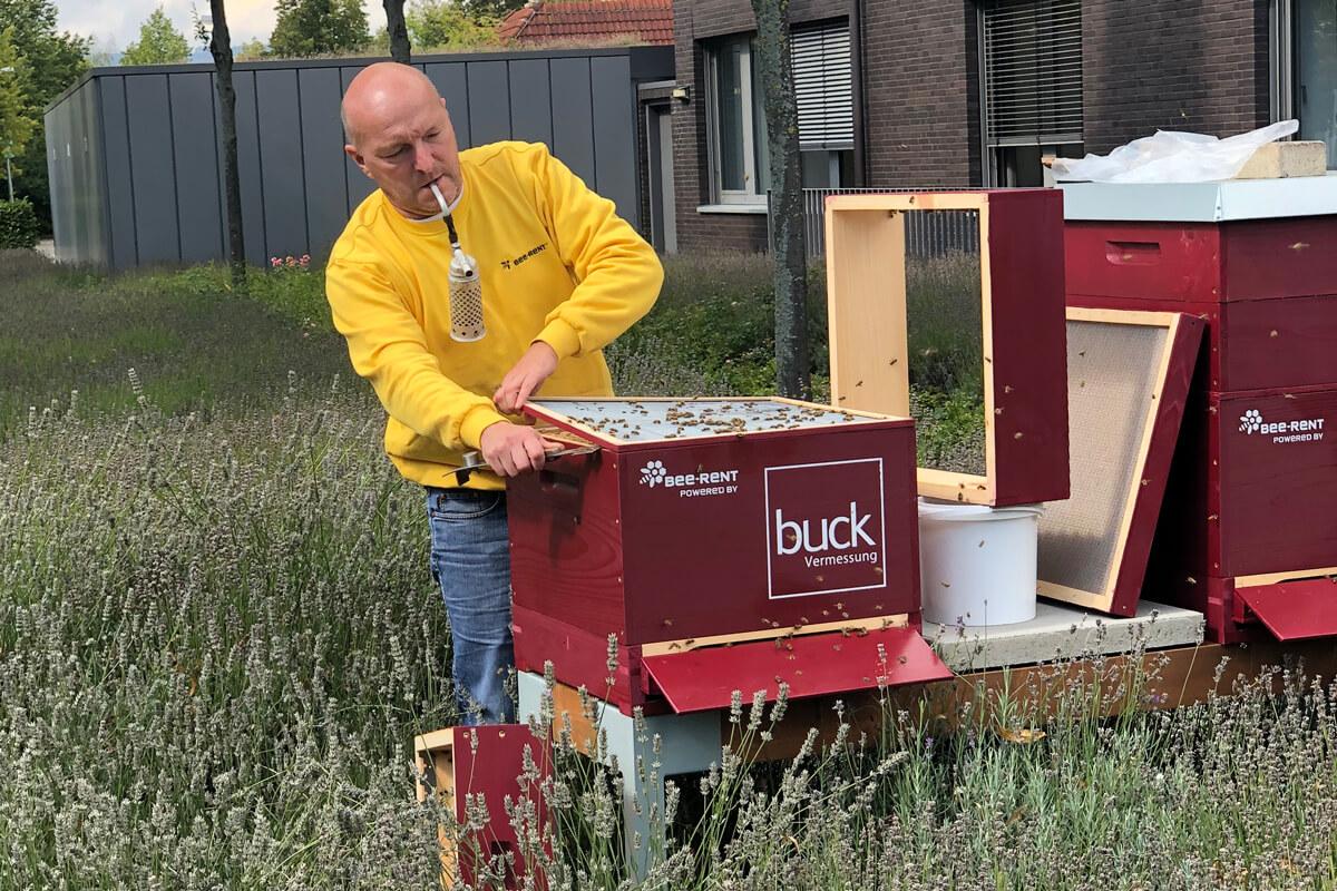 buck Bienen, bee-rent